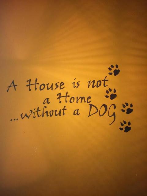 dom w górach, nasz dom, pies w górach