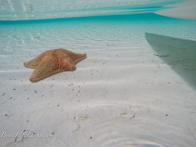 Starfish in shallow water with paddle board, Bahamas
