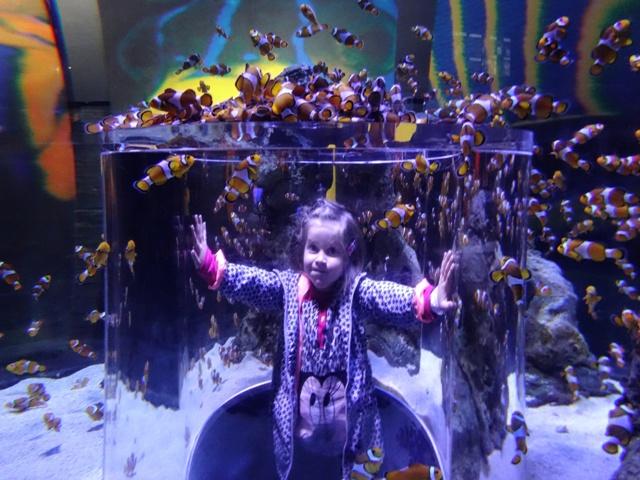Helia nadando entre peces payaso
