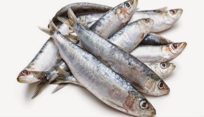 5 Alasan Kenapa Sarden Harus Ada Di Sajian Makanan