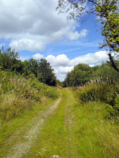 A country lane with grass growing over it, miles from anywhere