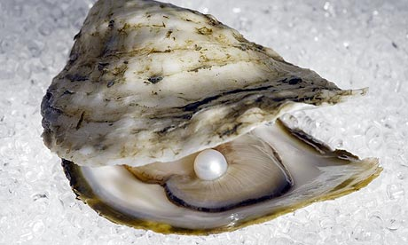 Slikovni rezultat za Oysters can change gender depending on which is best for mating
