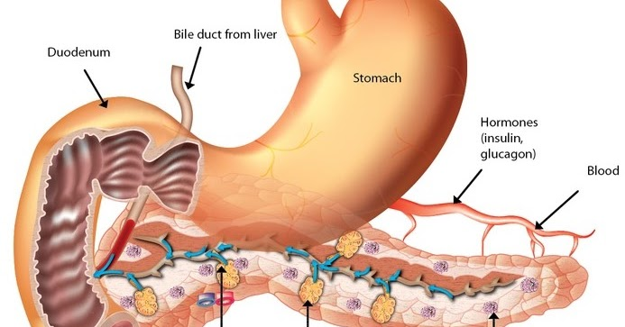 Biology : Structure,Function Of Pancreas