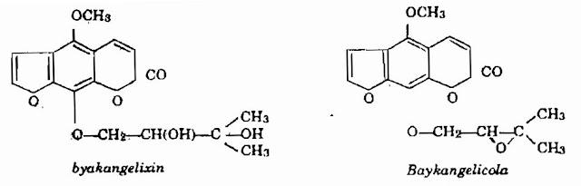 Thành phần HH xuyên Bạch Chỉ - Angelica anomala - Nguyên liệu làm thuốc Chữa Cảm Sốt