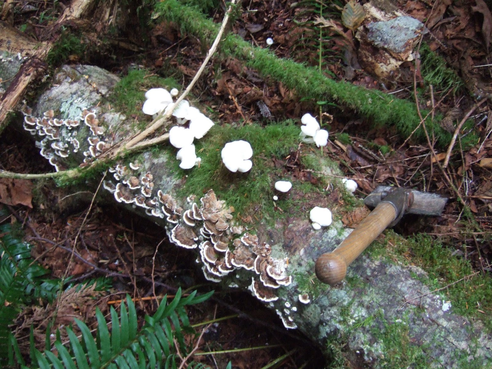 Wa Mushrooms Images - Reverse Search