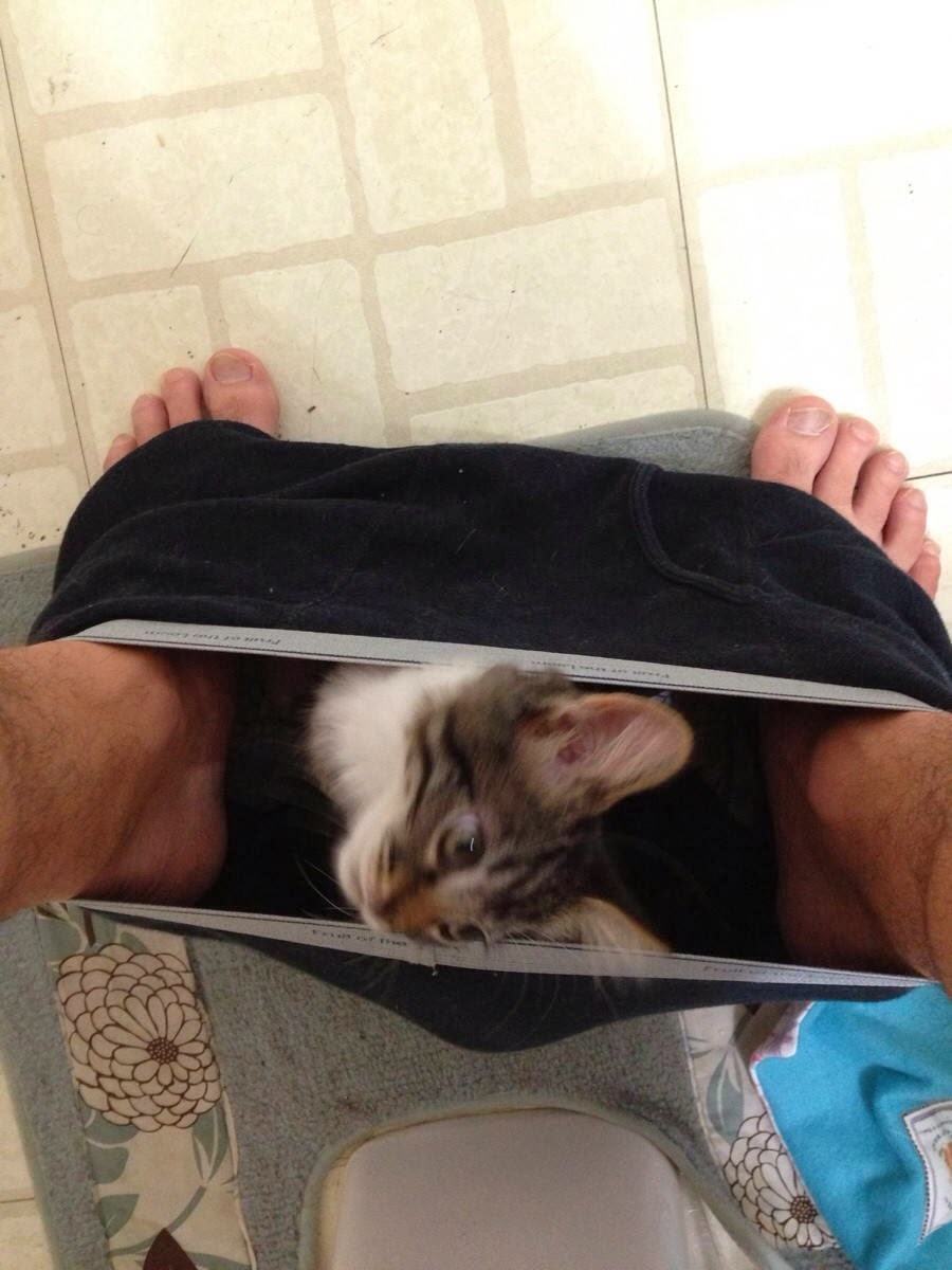 Funny cats - part 93 (40 pics + 10 gifs), cat annoys owner taking dump