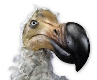 pajaro dodo
