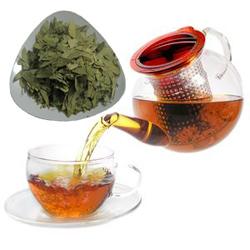 khasiat daun jati cina, efek samping dan kontra indikasi