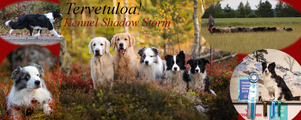 Kennel Shadow Storm