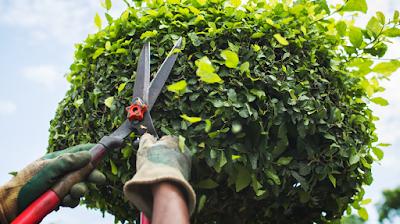 Importancia poder árboles