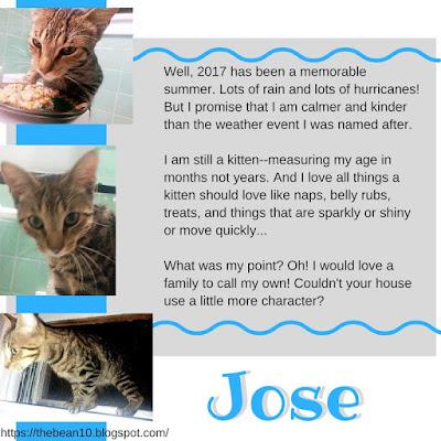 http://www.adoptapet.com/pet/19267781-rochester-new-york-kitten