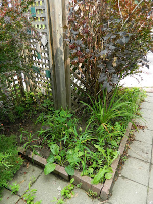 Toronto Leslieville Front Garden Cleanup Before by Paul Jung Gardening Services--a Toronto Gardening Company