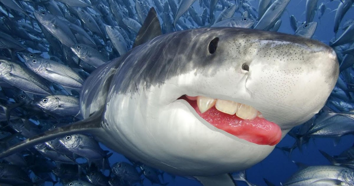 12 Arti Mimpi Digigit Ikan Menurut Primbon Jawa