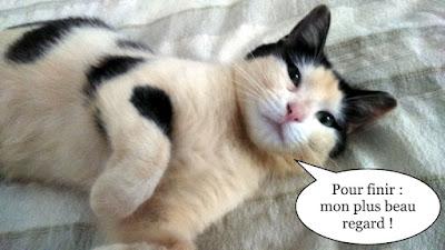 Shooting photo pour une chatte tricolore.
