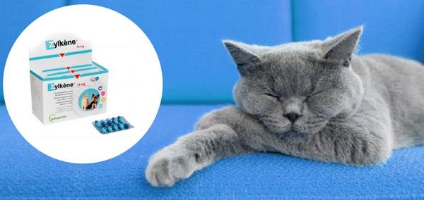 Zylkène clamant naturel pour chat