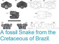 https://sciencythoughts.blogspot.com/2013/06/a-fossil-snake-from-cretaceous-of-brazil.html