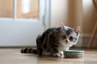 Supaya Kucing Liar Tidak Mengganggu Kucing Peliharaan
