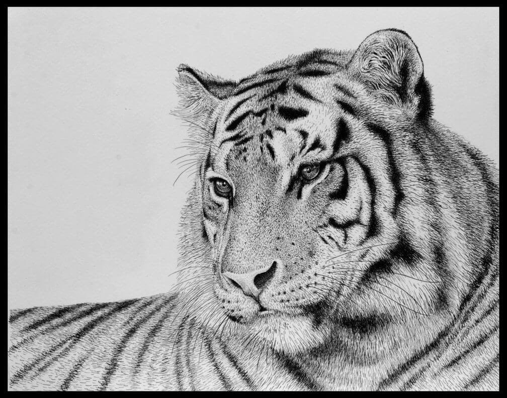 07-Tiger-Rens-Ink-Animal-Wildlife-Pen-and-Ink-Stippling-Drawings