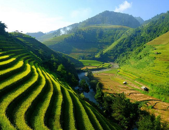 Xvlor Mu Cang Chai terraced fields