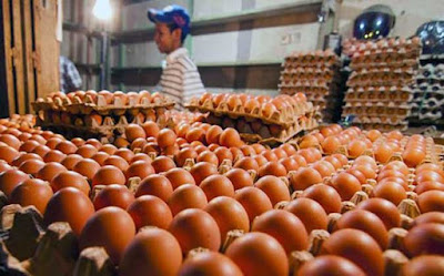 Harga Telur Ayam Di Ambon Rp2.000/Butir