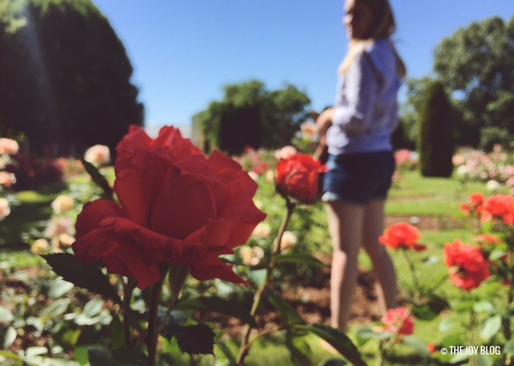 Julia Davis Park Rose Garden // www.thejoyblog.net
