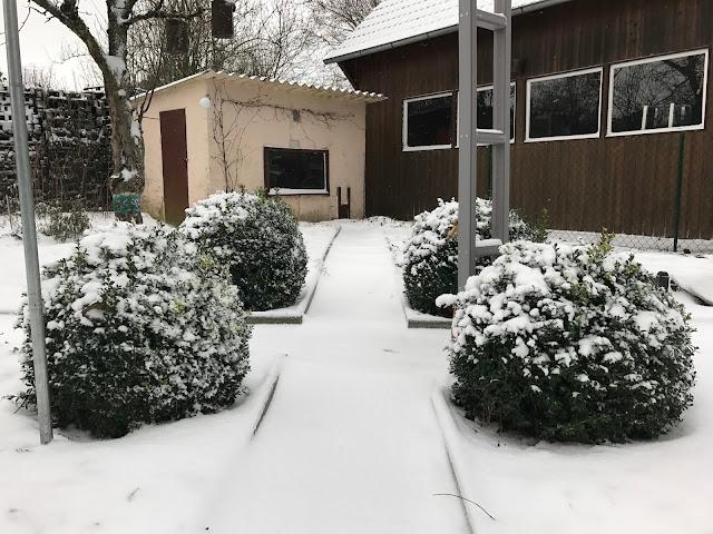 Buchskugeln mit Schneehaube (c) by Joachim Wenk