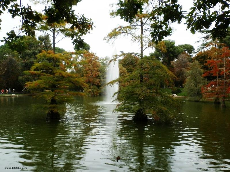Cipresess de los pantanos (Taxodium distichum) en el Retiro de Madrid