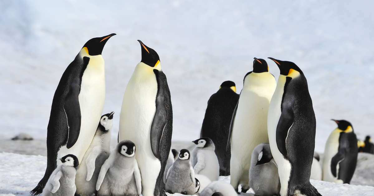 One Among The Largest Penguin Colonies On Earth Has Officially Disappeared