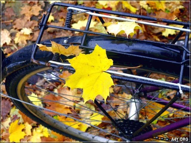 chiếc lá vàng tháng 9 rơi trên xe đạp