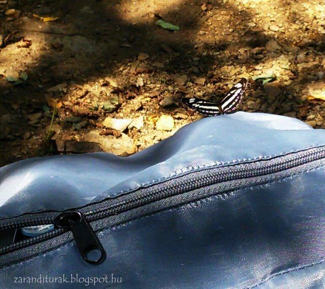 Kis fehérsávoslepke hátizsákon meleg nyári napon