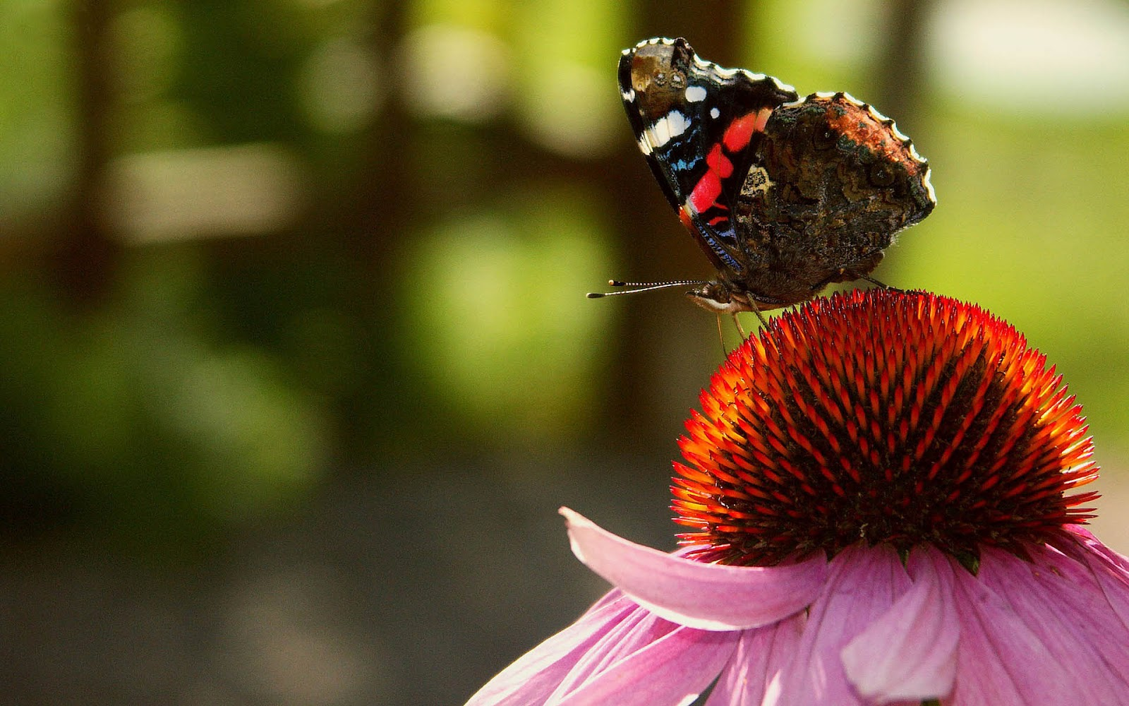 Rountree Moore Nissan >> Butterfly sitting on red flower or plant