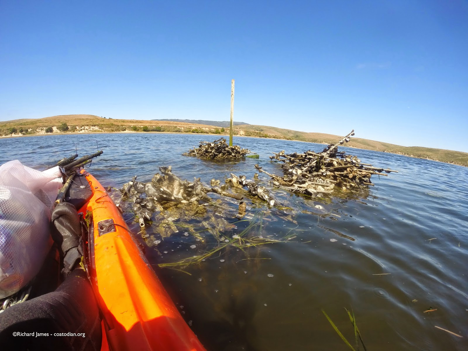 protect our shoreline news drakes bay oyster company what is