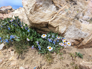 Flowers on Bald Mountain Hike by Mirror Lake in Uintas Kamas, Utah