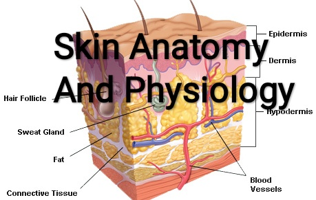 Healthcare Health Solution Skin Anatomy And Physiology