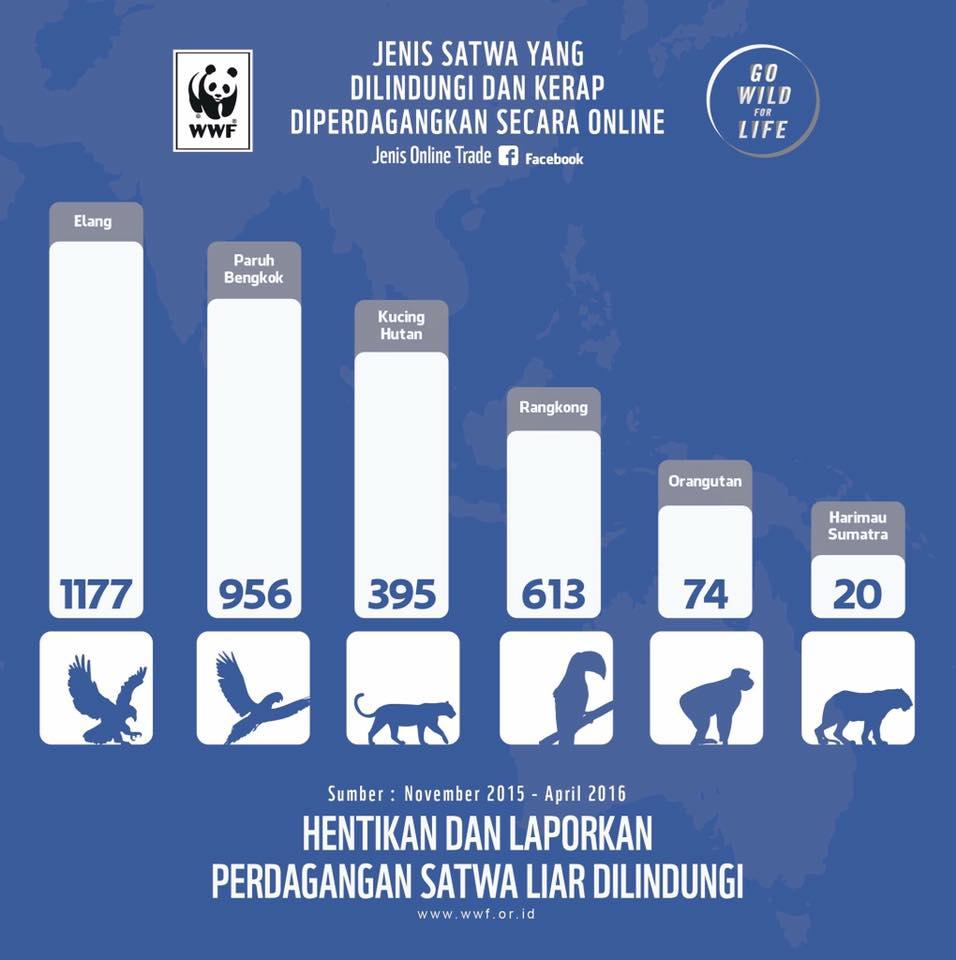 stop perdagangan satwa liar sahabat bekantan indonesia