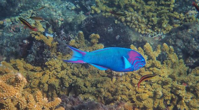 Fish & Aquariums Obliging Double Power Head Wave Maker Aquarium Fish Tank Pump Marine Reef Coral Top Watermelons