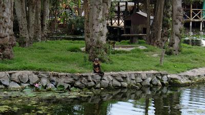 Parque de las Leyendas, zoologico Parque de las Leyendas
