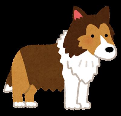 シェットランドシープドッグ(犬)