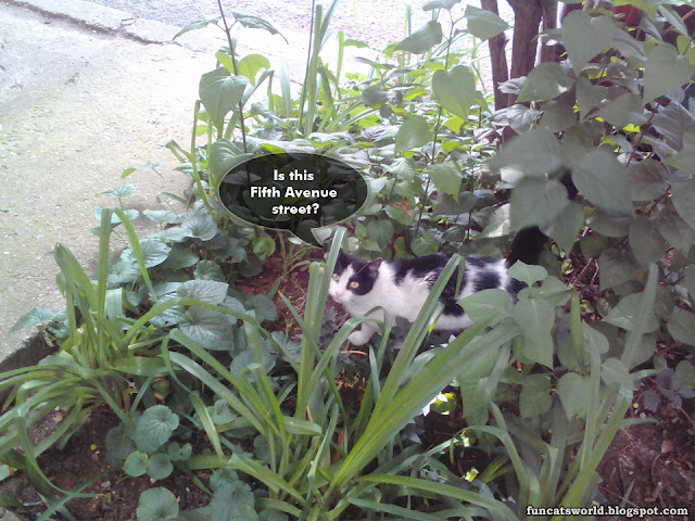 Cat on a World Trip