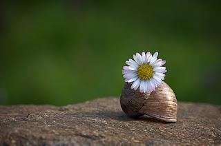 cultiver-sa-patience-avec-bonne-humeur-en-toutes-circonstances