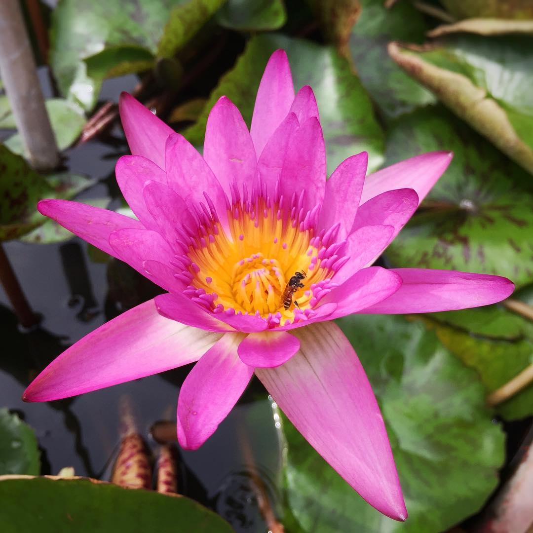 Top10 Beautiful Flowers Free Download Whatsapp Image Hd