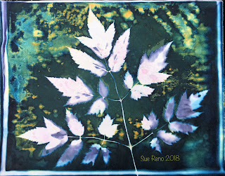 Wet cyanotype_Sue Reno_Image 383