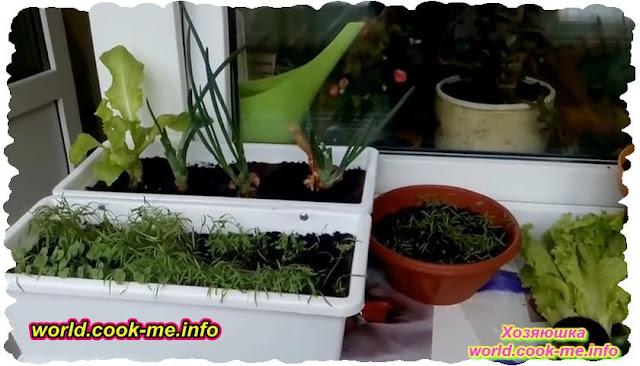 Что и как можно вырастить дома на подоконнике? Огород на подоконнике.
