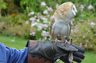 Cara Memelihara Burung Hantu Yang Benar Untuk Pemula
