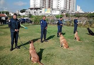 Canil da Guarda Municipal de Jundiaí trás Instrutora de busca e resgate com cães
