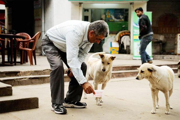 Delhi High Court states that there are no laws that prohibit people from feeding stray animals lawescort