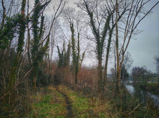 Moycullen Woods walk