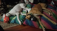 two dogs lying on beds sleeping