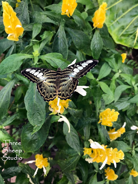 Butterfly Atrium, Hershey PA