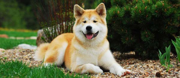 http://shum68.urest.org/dog_2